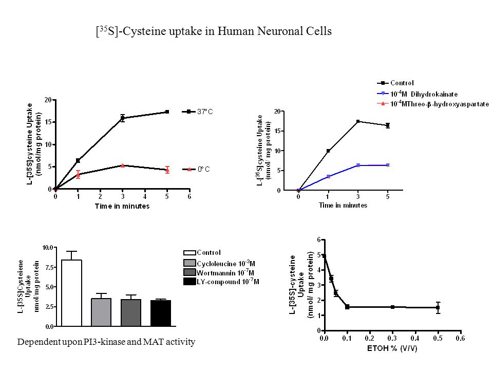 [35S]-Cysteine uptake in Human Neuronal Cells